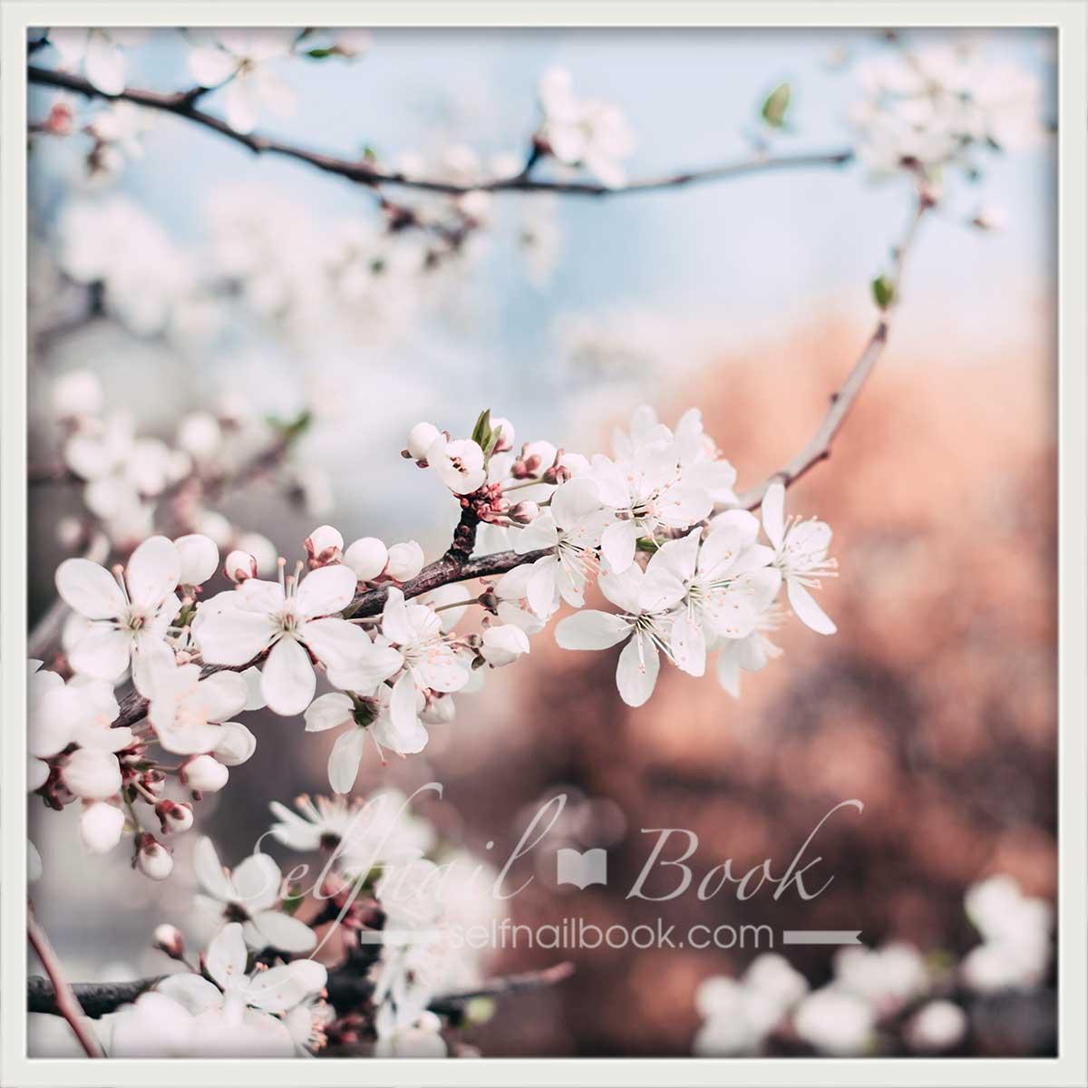 桜ネイルのデザイン3選
